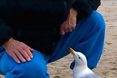 geoff with hungry gull